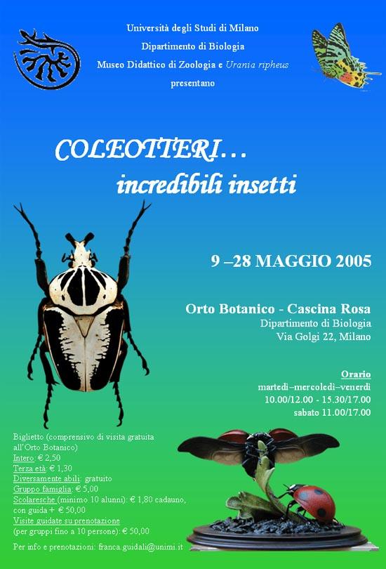 Coleotteri...incredibili insetti