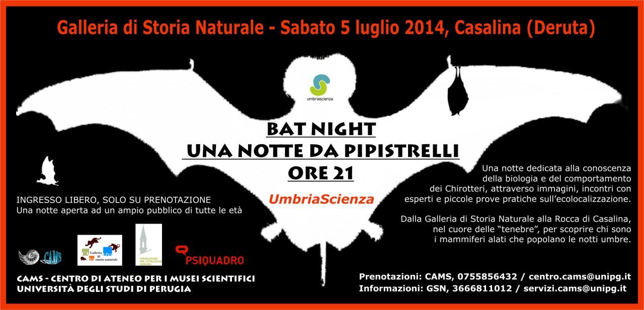 BAT-NIGHT 2014