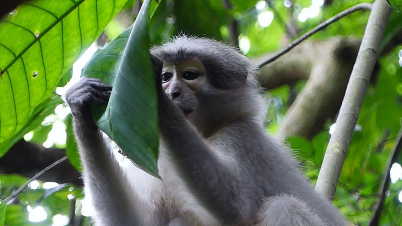 PRESENTAZIONE ECOTOUR IN TANZANIA