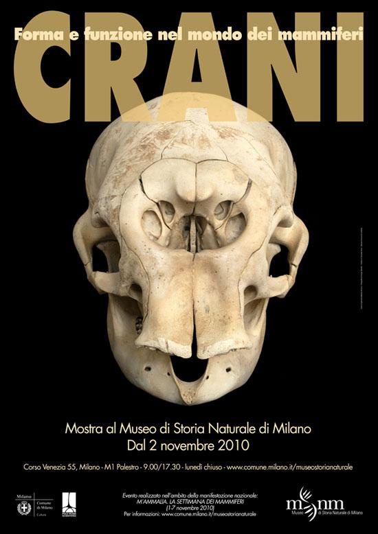 Crani. Forma e funzione nel mondo dei mammiferi