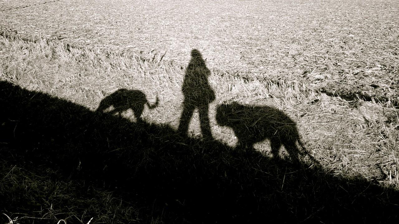 Il cane. Conoscerlo per comprenderlo. Il legame di attaccamento, la comunicazione, arriva un   bambino. Evidenze scientifiche