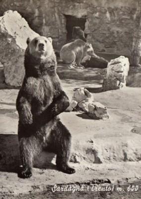 L'orso nella tradizione popolare, nell'etologia e nella gestione faunistica