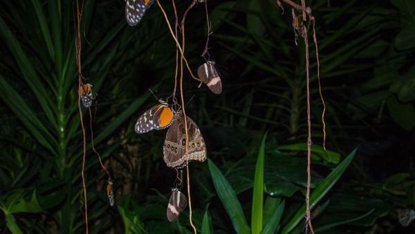La notte delle farfalle