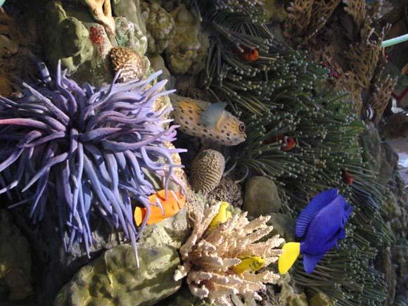 La Barriera corallina: una nuaova sala del Museo Civico di Zoologia di Roma