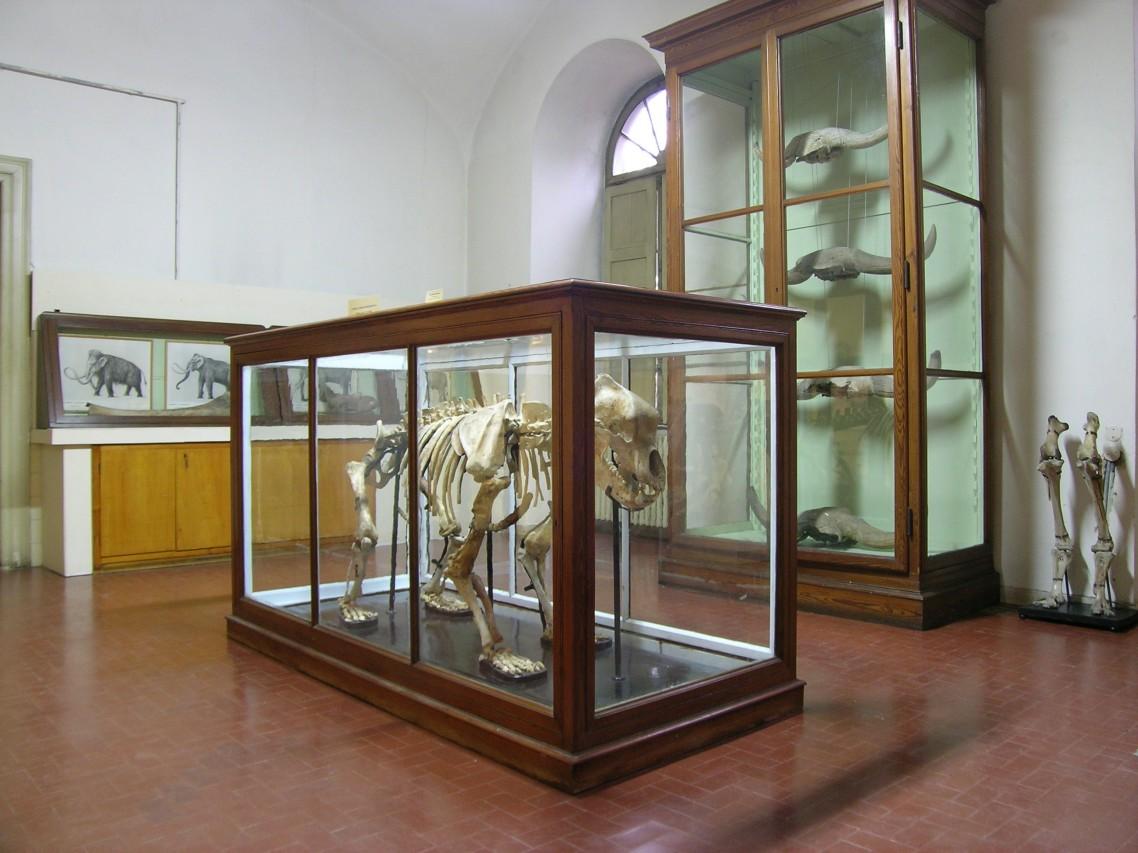GEP 2016 ai Musei di Pavia