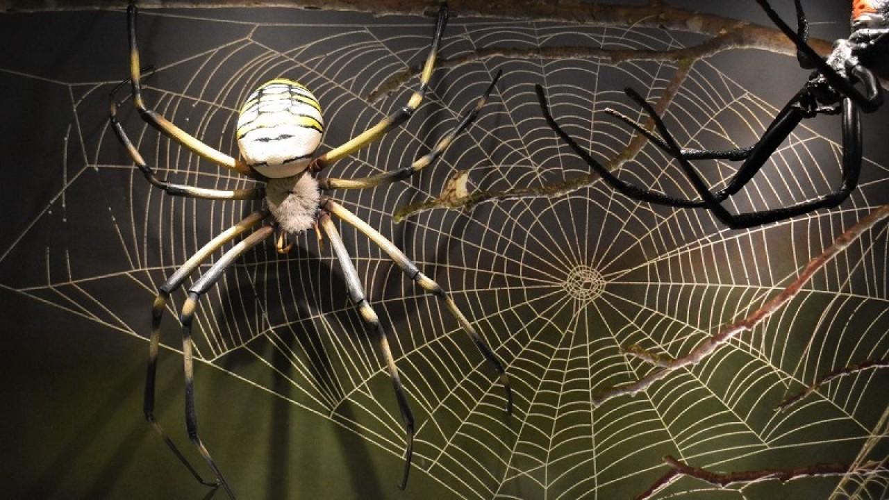 """""""Mondo a 8 zampe: i ragni e le loro straordinarie caratteristiche"""""""