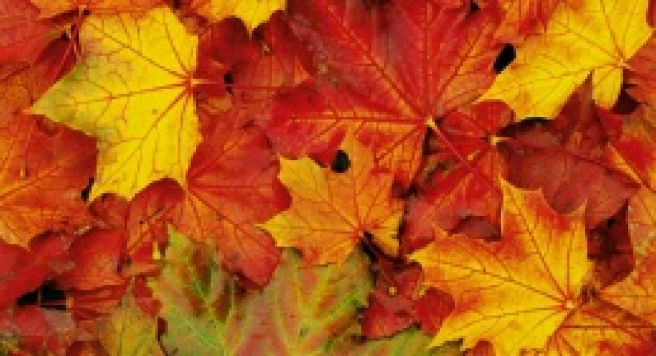 ESCURSIONE NATURALISTICA: I colori dell'autunno