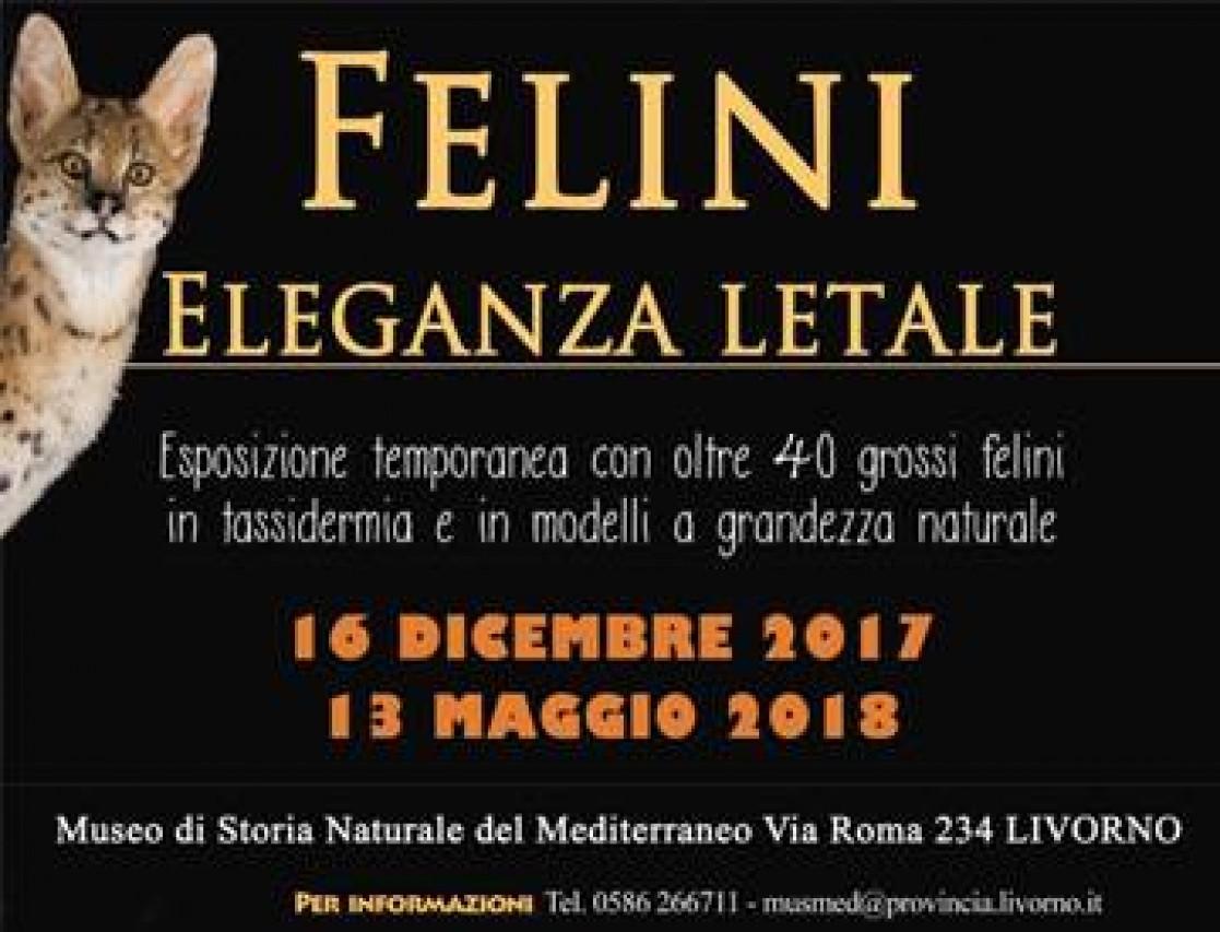 Felini, eleganza letale