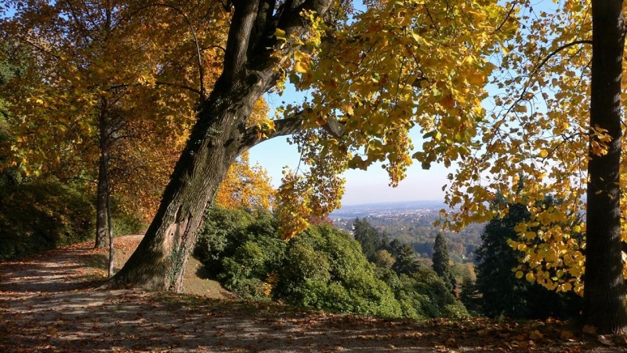 Proroga mostra Le stagioni degli alberi