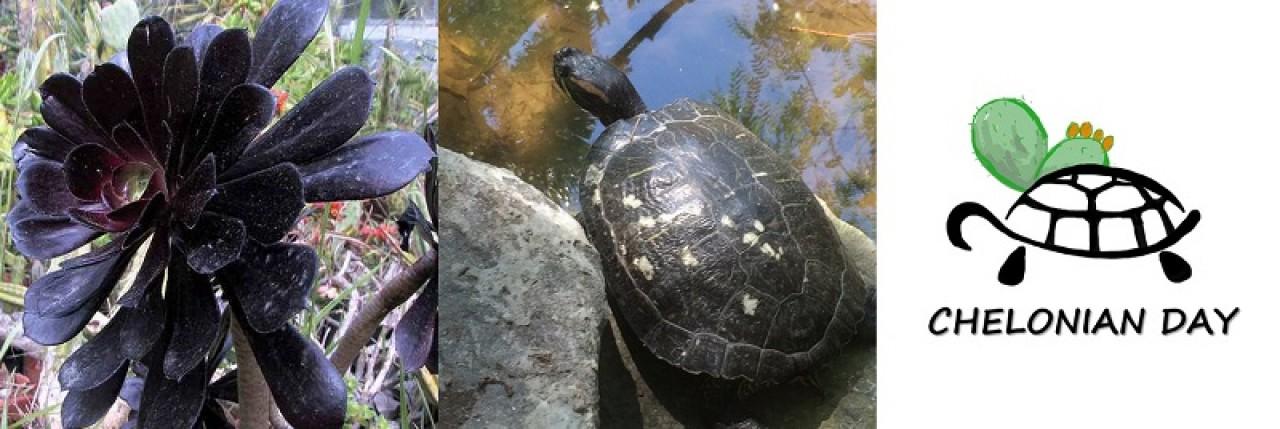 Piante grasse e tartarughe: un singolare connubio tra flora e fauna