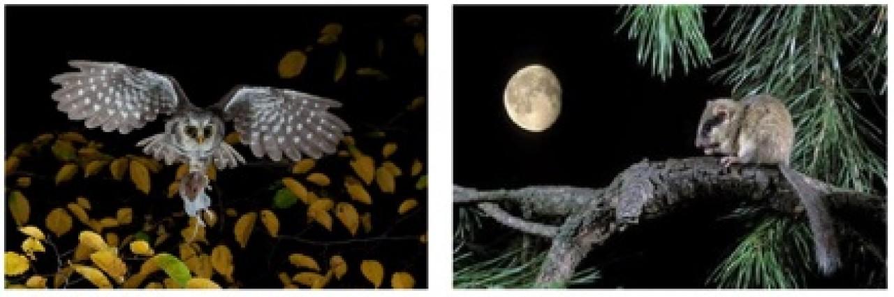 Quando cala la sera…… gli animali della notte!