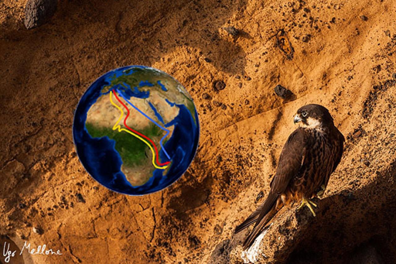 Tra Europa e Africa: storie di rapaci migratori e altri animali, tra due continenti