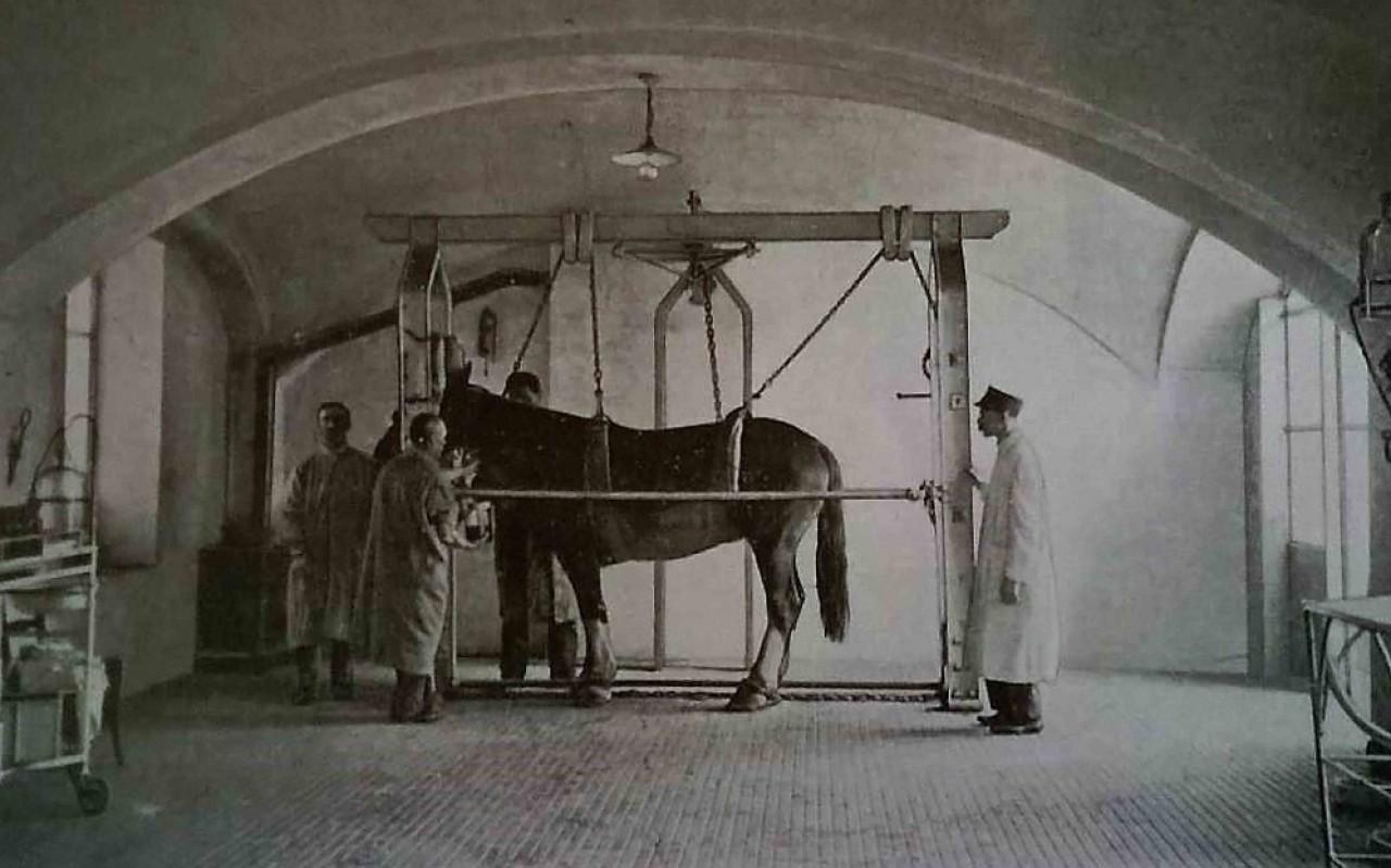 La Medicina Veterinaria nella Prima Guerra Mondiale