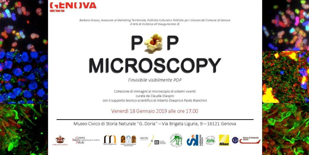 POP MICROSCOPY, l'invisibile visibilmente POP