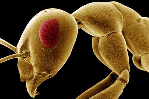 Micromondi: viaggi nel mondo del microscopicamente picco