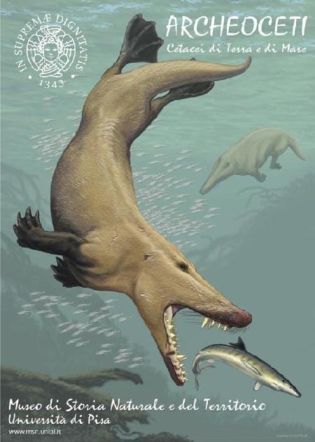 ARCHEOCETI - Cetacei di terra e di mare