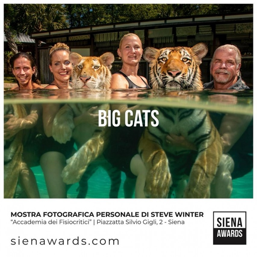 Big Cats e Above us only sky