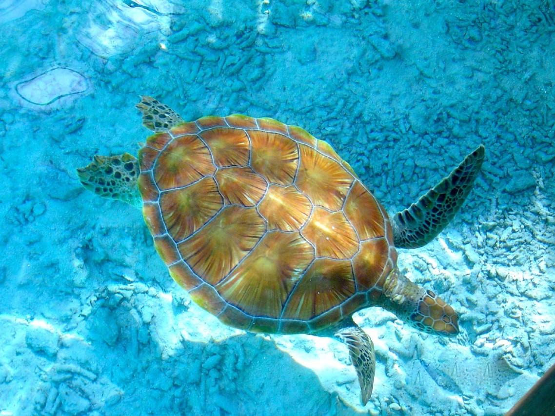 L'estinzione delle tartarughe ninja. Anche i supereroi possono morire